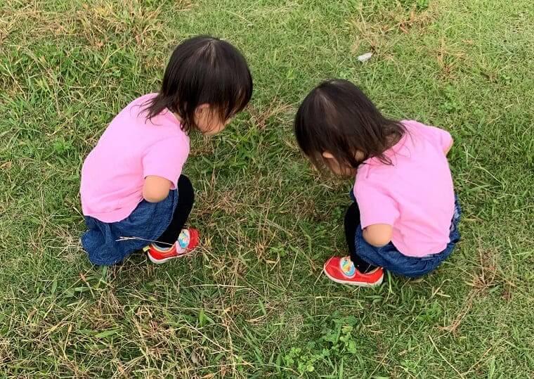 草むらで向かい合って虫を見つめる双子の女の子
