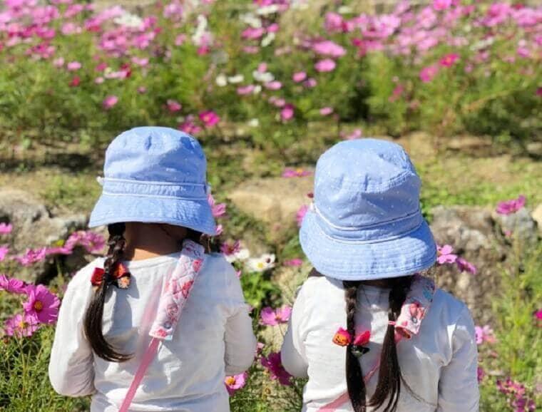 コスモス畑を見つめる女の子の双子
