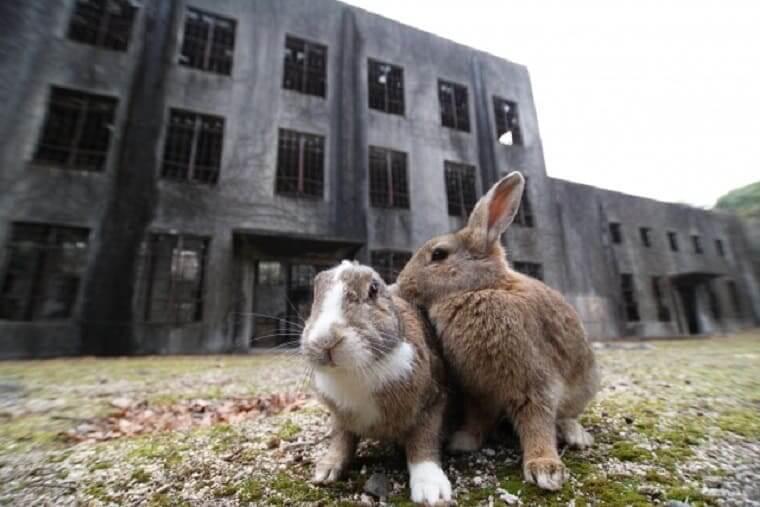 広島県大久野島の戦争遺跡とうさぎたち
