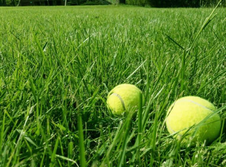 芝生の上に2個転がった公式テニスボール